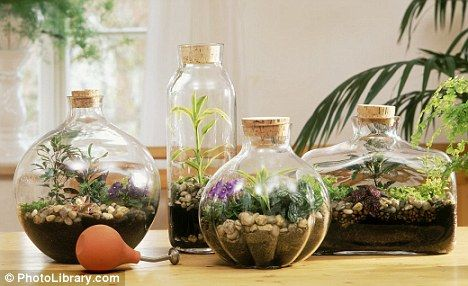 Bottle gardening. My kid loves watching plants grow from seed and this is a great way for her to watch plants grow up close. #terrarium
