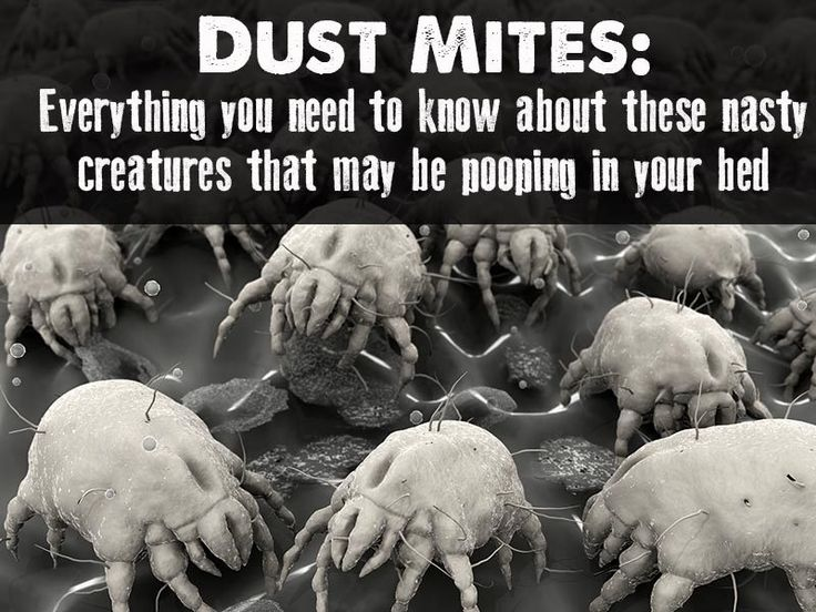 1000 ideas about dust mites on pinterest dust mite allergy bed bugs and roaches - What you need to know about jacquard bedding ...