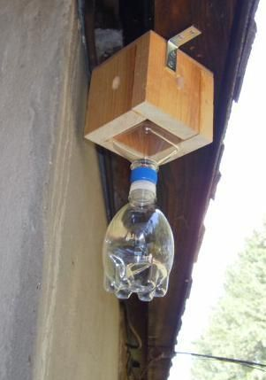 This easy trap will help control carpenter bees that threaten your home without the need for baits or poisons, and it will not attract or harm any other kind of bee or insect. The trap will not lure carpenter bees in from a great distance, but will trap those that are intent on damaging the protected structure. Wood-boring female carpenter bees enter the pre-made holes, then they become dessicated by the sun in the capture bottle. The first day this trap was installed, it caught the four…