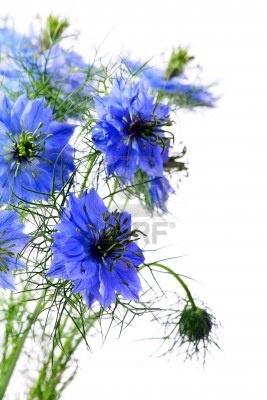 blauwe bloemen - Google zoeken