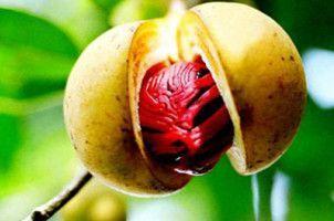 Nutmeg,Myristica fragrans,Essential Oil