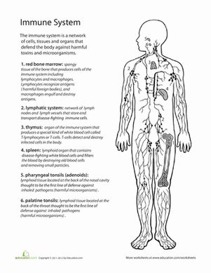 Middle School Life Science Worksheets: Inside-Out Anatomy: The Immune System