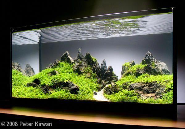 Exceeding volunteered planted aquarium Click Here in 2020 ...