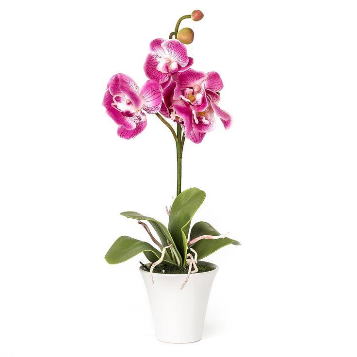 Orchidej v květináči. Obrázek ilustrační, může být jakákoliv. Odstíny růžové, fialové, bílé vítány. Kdejaká zvláštnost (žlutorůžově mramorovaná) taky.