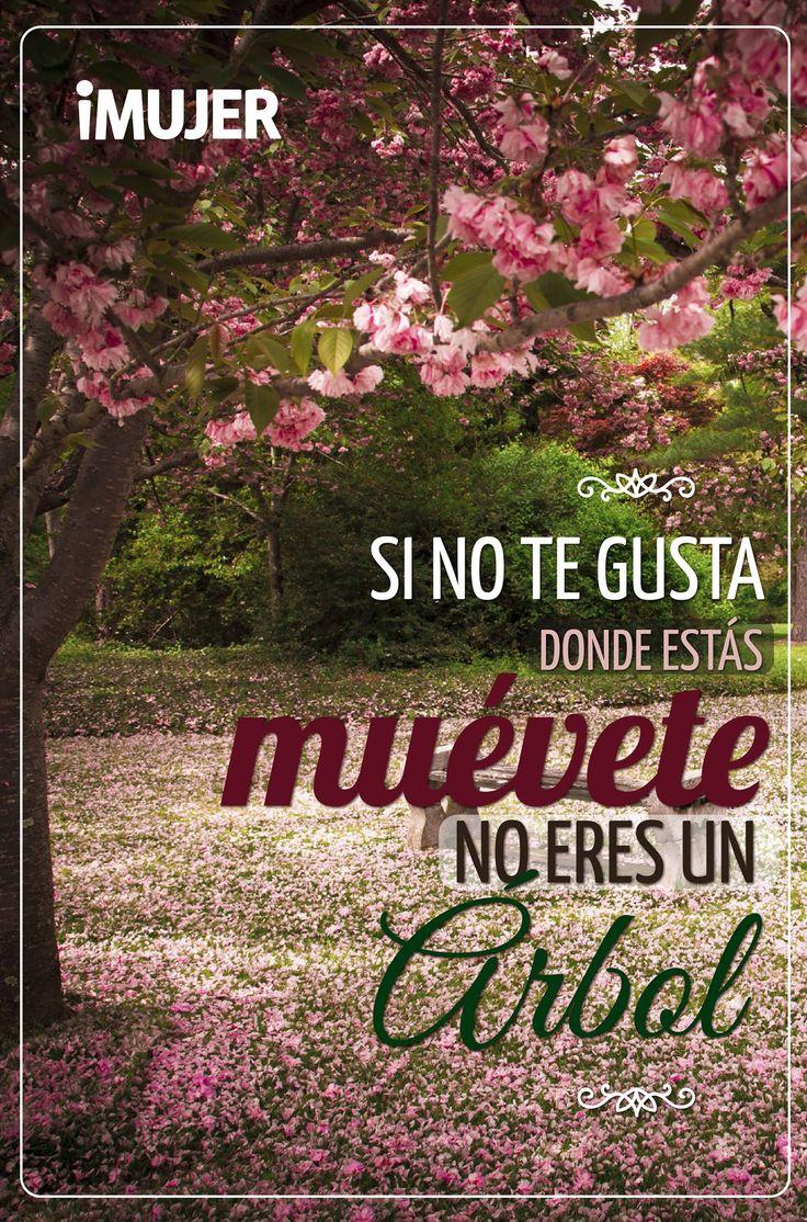 #Frases Si no te gusta dónde estás, #muévete, no eres un #árbol.
