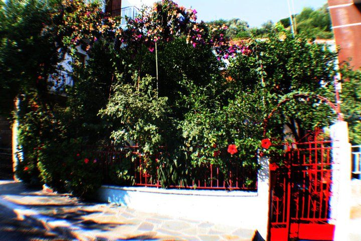 Red gate and flowers