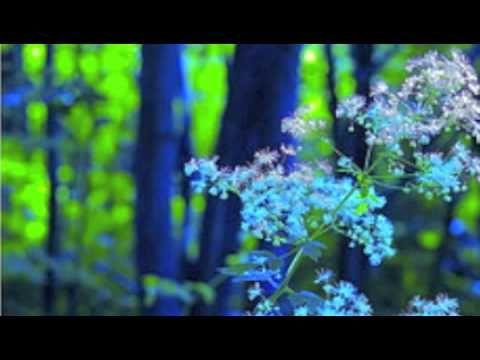 ▶ Free Healing Meditation from Deepak Chopra by NPowerYourMind.com - YouTube
