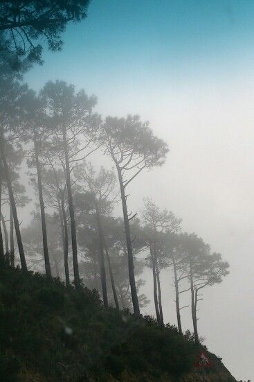 Trees in the mist, Signal hill
