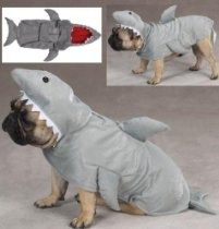 in honor of shark week: shark pug