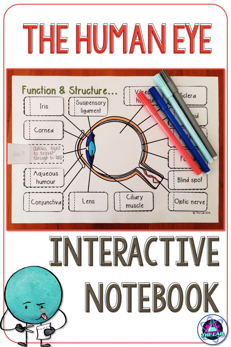 These interactive notebook activities are a perfect addition to your biology lesson on the Human Eye. It covers the anatomy (structure and function) in a fun and engaging way. Clear diagrams make it easy to identify structures. So much more than just a worksheet!