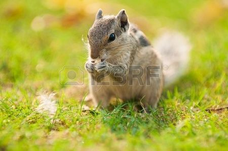"""Did you know that the word """"squirrel"""" means """"shadow tail"""" in Greek?"""