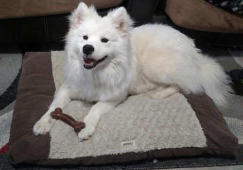 Adopt Royal On Pets Pet Adoption Dogs