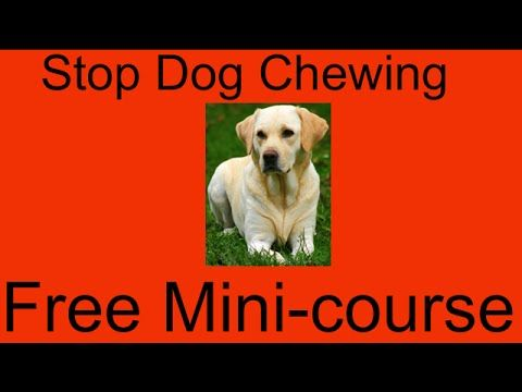 **ASAP** Stop Dog Chewing Garden Furniture - Free Mini-course to Stop Do...
