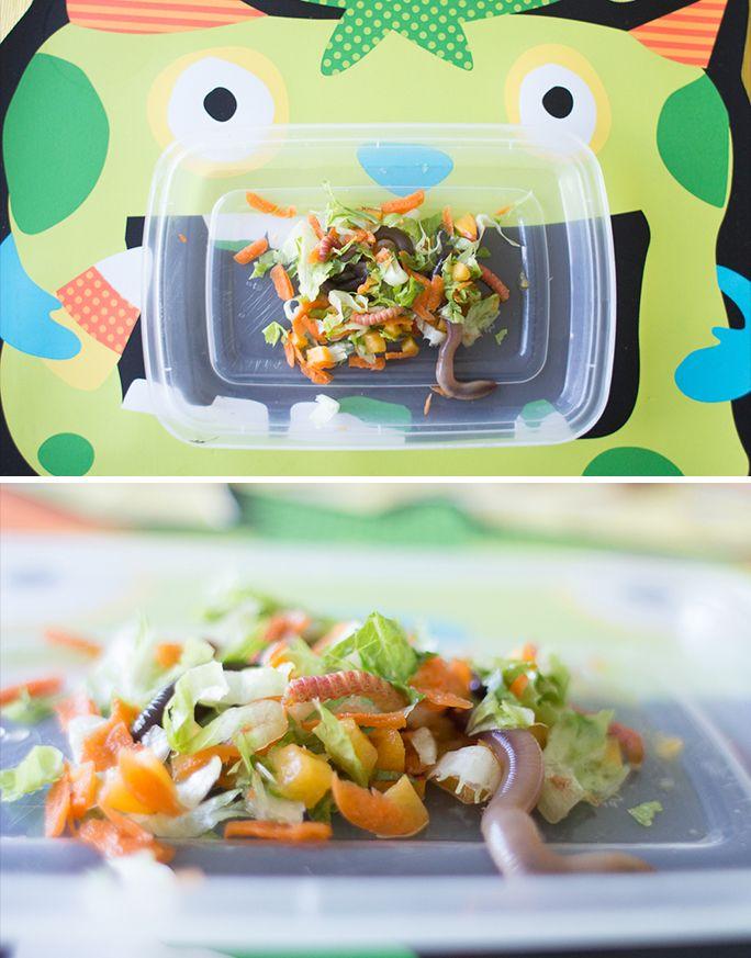 Box turtle diet >> www.TinyTurtleJourney.com