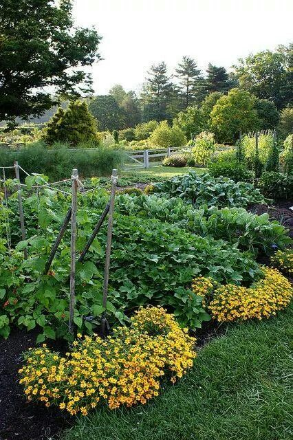 Add flowers at the end of rows for beauty, and to attract more pollinators!