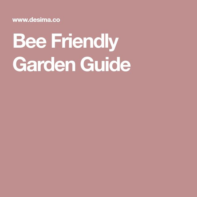 Bee Friendly Garden Guide