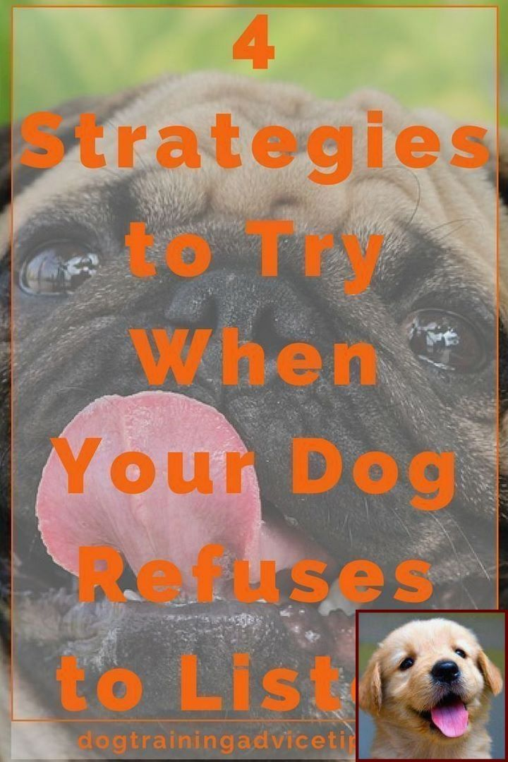 Ways To Train Your Dog Not To Bark And Best Way To Train A Dog To