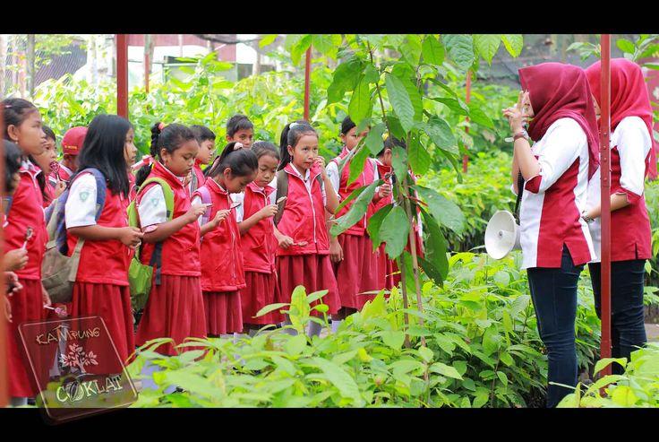 Sdn Sumberagung 1  Belajar Tentang Tanaman Kakao di Tempat Pembibitan