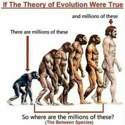 "1) There are not ""millions of these;"" the first species pictured represents the hypothesized, now extinct, and yet to be discovered 'missing link' connecting human evolution's beginning to the family of creatures preceding it--not a chimpanzee. 2) The reason there aren't millions of the middle species is because they also represent now-extinct human ancestors, i.e. Homo heidelbergensis. 3) All of the species behind the modern human shown represent currently extinct, ancient human ancestors."