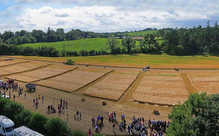 Traditional Reaping, Binding, Ploughing & Tilling Exhibited At 40th Annual Moynalty Steam Threshing Festival 2015 #festival #ireland