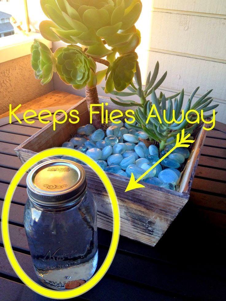 How To Keep Flies Away - jar/bag pennies and water.