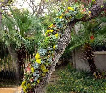 28 best I succulents and alpine gardens images on Pinterest