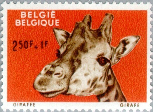 Stamp: Giraffe (Giraffa camelopardalis) (Belgium) (ZOO Antwerpen) Mi:BE…
