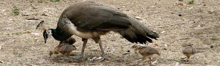 Peacock Farm   CBD - 65 Norman Road, Willunga = 44min