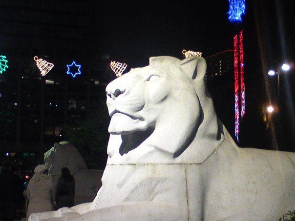 #Glasgow #Lion