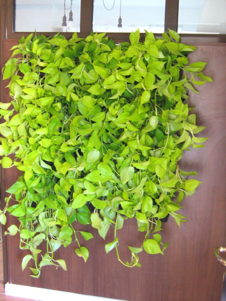 Green Walls @ Cabinet de Avocatura