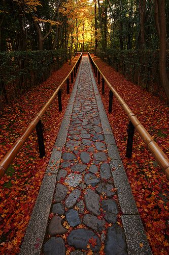 The end of autumn in Daitoku-ji temple, Koto-in Zen Temple, Kyoto, Japan