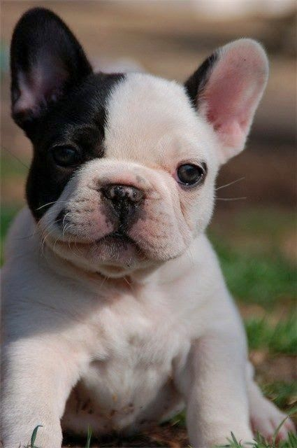 Top 5 Family Friendly Dog Breeds, you will love all of these :)
