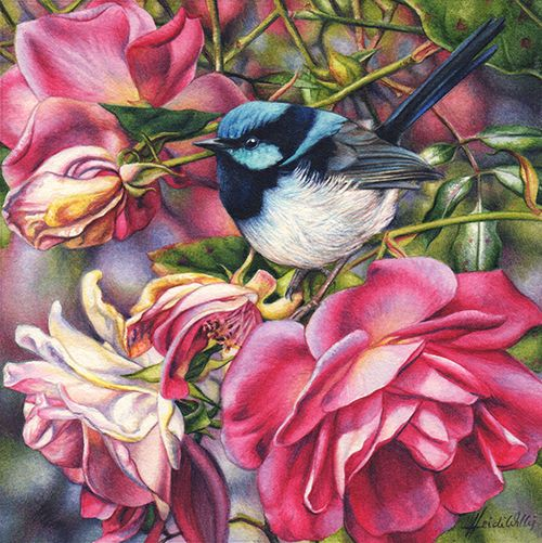 Blue Wren and Roses-0