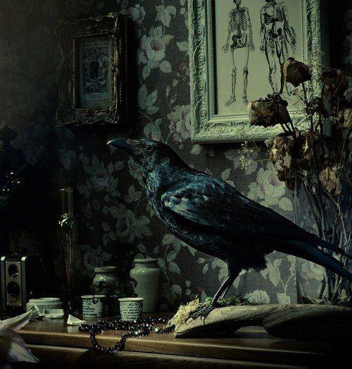 Crow. Taxidermy. Dark Interiors. Gothic.