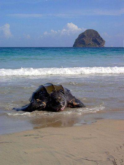 tortue & diamant beach/Martinique fwi