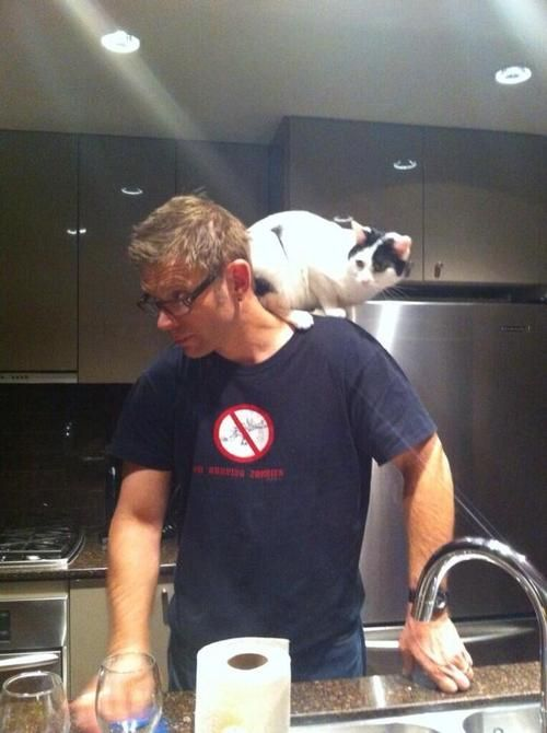 """""""My kitty thinks he's a parrot. Everyone... This is Cody."""" via Mark Pellegrino  *** I didn't think I could love this man any more than I already did ***"""