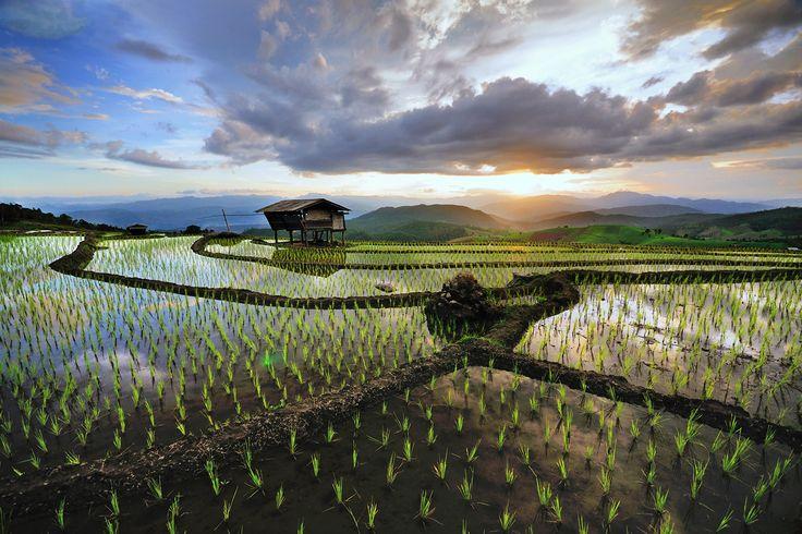 Photograph Chinag Mai rice terraced by Wanasapong Jaiinpol ...