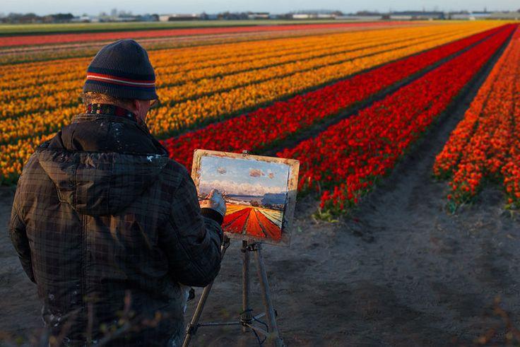 pays bas champs de tulipes colores 151   15 photos dincroyables champs de tulipes colorés   tulipe photo image hollande fleur couleur champ ...