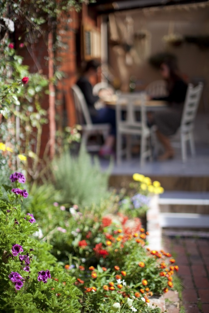 flowers & home grown vegetables sprawl across the courtyard out the back at Lowlands in Thornbury, Melbourne