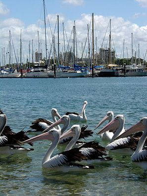 Mooloolaba Wharf, Mooloolaba, Queensland #Australia. Photo by @Celeste Delaune Delaune Brignac