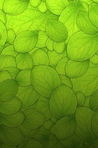 Green Leaves ~ Nature Art Photography
