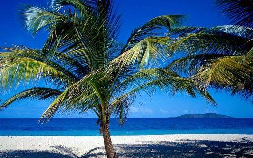 Oooh la la - palm trees and a warm breeze please!