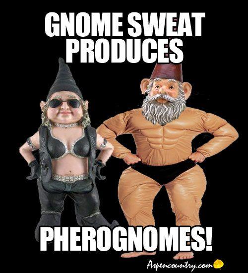 Gnome Gym Trivia: Gnome sweat produces Pherognomes.