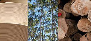 WWF Chile lidera alianza regional para Pulpa y Papel Ejecutar una estrategia regional de Pulpa y Papel y plantaciones forestales, es el objetivo de la Alianza del Sur para Pulpa y Papel de WWF, la organización mundial de conservación, la cual está integrada por las oficinas de Brasil, Colombia y Chile, en conjunto con la Fundación Vida Silvestre de Argentina.