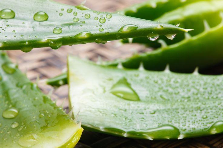 Vandaag de dag wordt het kunnen van de aloë vera plant uitgemolken en gecommercialiseerd, maar welke gezondheids- en lichaamsvoordelen kloppen écht?