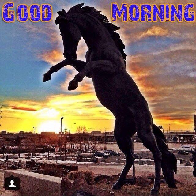 25 best Denver Broncos images on Pinterest Denver broncos, Broncos - fresh e blueprint denver
