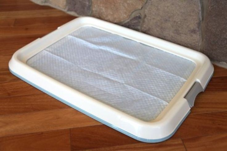 How Long Does It Take To Train A Puppy To Use A Pee Pad Ideas