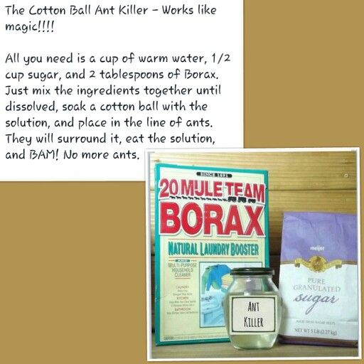 cotton ball ant killer helpful cleaning solutions pinterest borax ant killers ants and cotton. Black Bedroom Furniture Sets. Home Design Ideas