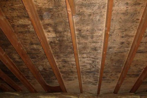 Surviving Mold In Your Attic Life Hacks Attic Bedrooms