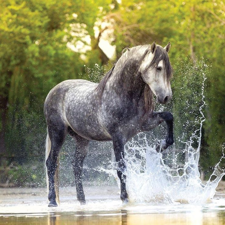 Horse Splashing Water! I have no idea who's photo this is but it is BEAUTIFUL! #beautifulhorses